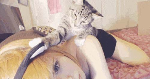 The cat lies on the girl and plays with toy ears, a cute animated gif with cats.