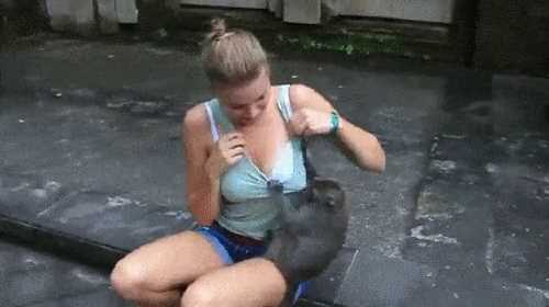 The monkey touches the girl's tits in the zoo, a funny animals animated gif.