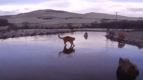 A great winter evening, the cat slides on the ice of a frozen lake, animated gif and video.